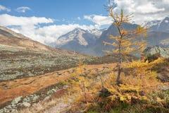 Rzeka jak wąż płynie w Ahrntal Włochy w jesieni Obrazy Stock