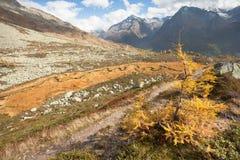 Rzeka jak wąż płynie w Ahrntal Włochy w jesieni Zdjęcie Royalty Free