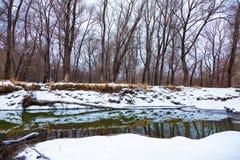 Rzeka która płynie w lesie w zimie fotografia royalty free
