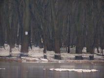 Rzeka lód Fotografia Stock