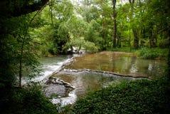 Rzeka, las Obrazy Royalty Free
