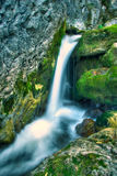 rzeka leśna Zdjęcia Stock