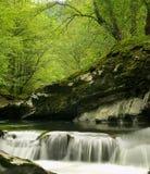 rzeka leśna Obraz Royalty Free