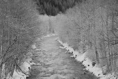 Rzeka między mroźnymi drzewami Obrazy Stock