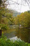 Rzeka między spadków drzewami Obraz Stock