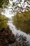 Rzeka między spadków drzewami Zdjęcie Royalty Free
