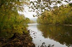 Rzeka między spadków drzewami Zdjęcie Stock