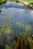Rzeka ogród Obrazy Royalty Free