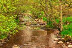 Rzeka Otaczająca lasów Lasowymi drzewami Fotografia Stock