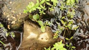 Rzeka płynie nad skałami w górach zatoczki zieleń zdjęcie wideo