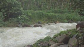 Rzeka płynie przez tropikalnego lasu deszczowego w dżungli Tropikalna rzeka, dżungla zbiory