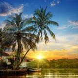 Rzeka, piękny wschód słońca i palmy, Fotografia Royalty Free