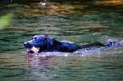 Rzeka pies Obraz Stock