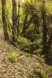 Rzeka po środku lasu w wiośnie zdjęcie stock