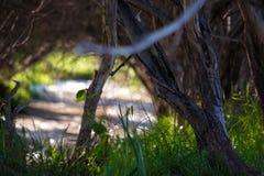 Rzeka pod osłoną drzewa Makro- strzelanina Fale i promienie słońce Zielona trawa Lato Kazachstan, fotografia royalty free