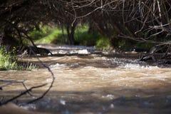 Rzeka pod osłoną drzewa Makro- strzelanina Fale i promienie słońce Zielona trawa Lato Kazachstan, obrazy stock