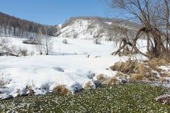 Rzeka przerastająca z algami w hoarfrost przeciw górom Obraz Stock