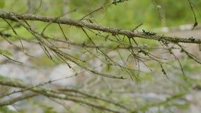 Rzeka przez gałąź drzewa Lasowa rzeka i drzewa w jesieni Obrazy Royalty Free