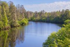 Rzeka przy Sałata jeziora parkiem w Tampa obraz royalty free