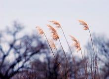 rzeka trawy Zdjęcia Royalty Free