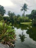 rzeka tropikalna Fotografia Stock