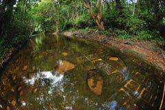 Rzeka tysiąc lingams fotografia royalty free