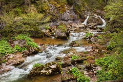 Rzeka w Apuseni, Rumunia Zdjęcie Royalty Free