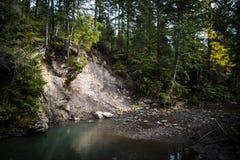 Rzeka w ciemnym lesie Lato Obraz Stock