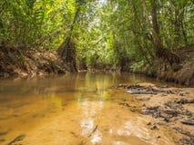 Rzeka w dżungli Obrazy Royalty Free