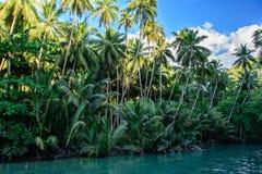 Rzeka w dżungli, Cebu wyspa Filipiny Obraz Royalty Free