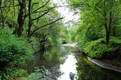 Rzeka w dolinie Fotografia Stock