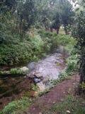 Rzeka w drewnach zdjęcie royalty free