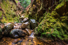 Rzeka w forrest Zdjęcia Stock