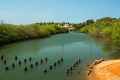 Rzeka w Gambia, Afryka Obrazy Royalty Free