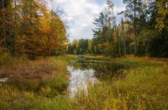 Rzeka w jesieni Zdjęcia Royalty Free