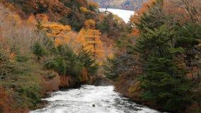 Rzeka w jesieni drzewie przy lasem zbiory