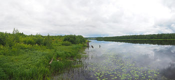 Rzeka w Karelia lecie fotografia stock