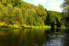 Rzeka w lesie Fotografia Royalty Free