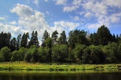 Rzeka w lesie. Zdjęcie Stock