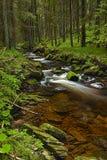 Rzeka w lesie Obraz Royalty Free