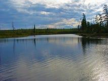Rzeka w lesie Obrazy Royalty Free