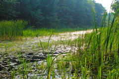 Rzeka w lesie Zdjęcia Stock