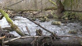 Rzeka w lesie zdjęcie wideo