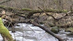 Rzeka w lesie zbiory
