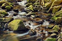 Rzeka w lesie - HDR Fotografia Royalty Free