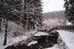 Rzeka w lesie podczas zima dnia Zdjęcia Stock