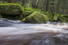 Rzeka w lesie, Sumava Fotografia Stock