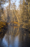Rzeka w Monza parku Fotografia Royalty Free