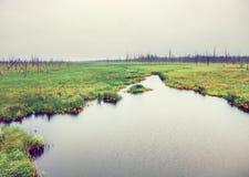 Rzeka w nieżywym lesie Zdjęcia Stock