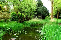 Rzeka w pięknym botanicznym parku w Kiel Niemcy Obraz Stock
